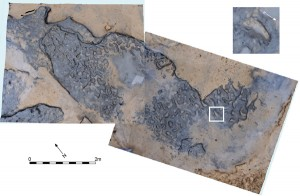 Vertical image of Area A at Happisburgh with model of footprint surface produced from photogrammetric survey with enlarged photo of footprint 8 showing toe impressions.  © Happisburgh Project