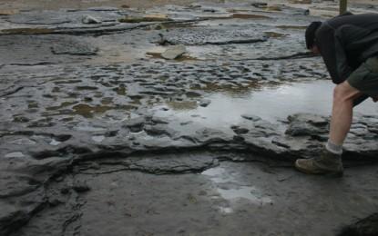 Earliest human footprints outside Africa found – in Norfolk