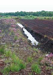 Peat extraction where Lindow Man found